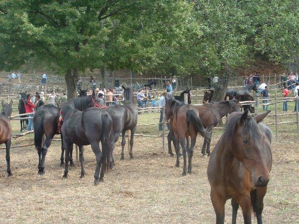 mostra cavallo 080612